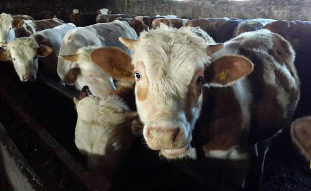103-2 Et ve Et Ürünlerinin İşlenmesi ve Pazarlanması